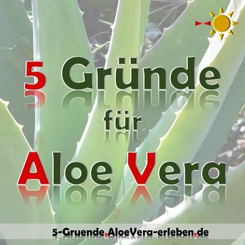 5 Gründe Aloe Vera